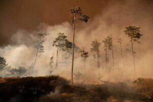 burning trees in California - Photograph: Liu Guanguan/Getty Images