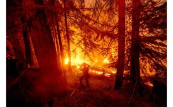 A firefighter battles the Creek Fire in the Shaver Lake community of Fresno County, Calif. - AP Photo/Noah Berger